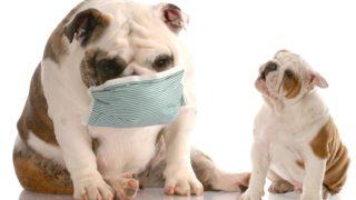 アレルギー対策ドッグフード