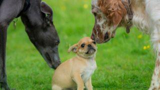 小型犬用におすすめのドッグフード