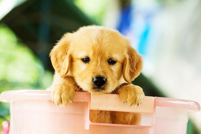 子犬の毛並みがパサパサなのはドッグフードが合っていない!