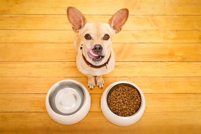 子犬が食べにくい時はモグワンをふやかす!