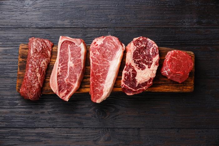 缶詰ドッグフードは動物性タンパク質が豊富を選ぶ